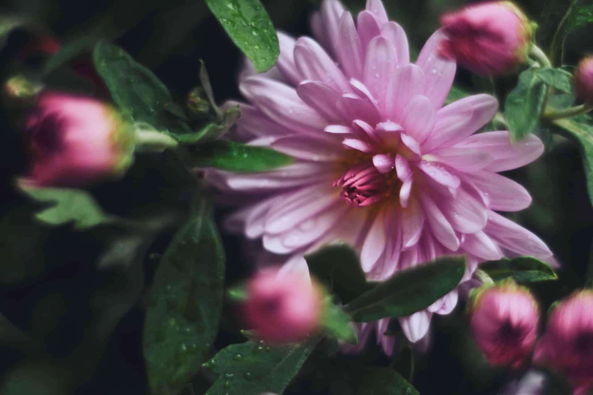 fleurs tombes