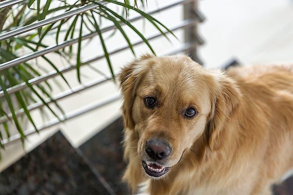 La perte d'un animal de compagnie : comment faire son deuil?