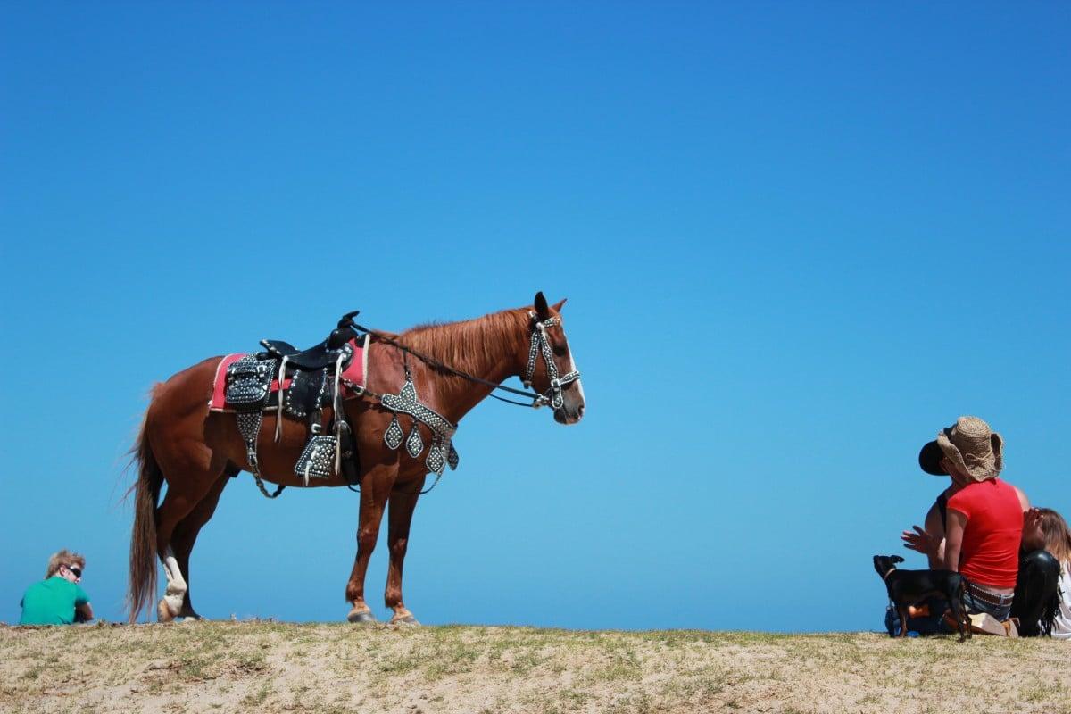 Randonnée à cheval en Argentine : allier plaisir et découverte