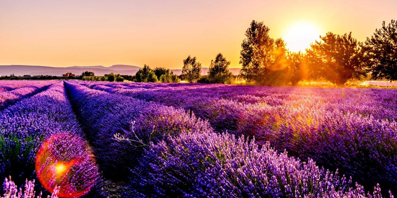 Destination vacances : Investissement dans une villa en Provence