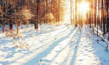 L'hiver au jardin : conseils, astuces et activités