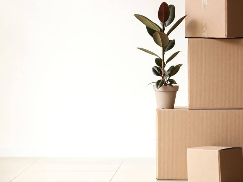 Votre prochain déménagement sera écologique !