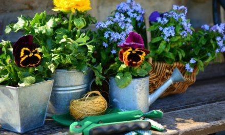 Trucs et astuces pour faire des économies au jardin
